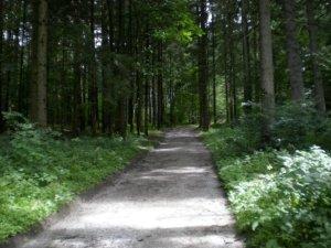 Perfecto ejemplo de un camino forestal (gravel road)